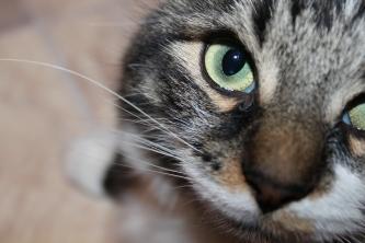 My beautiful cat Ion